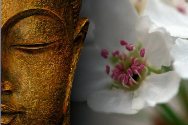 Buddha met bloem 600_400